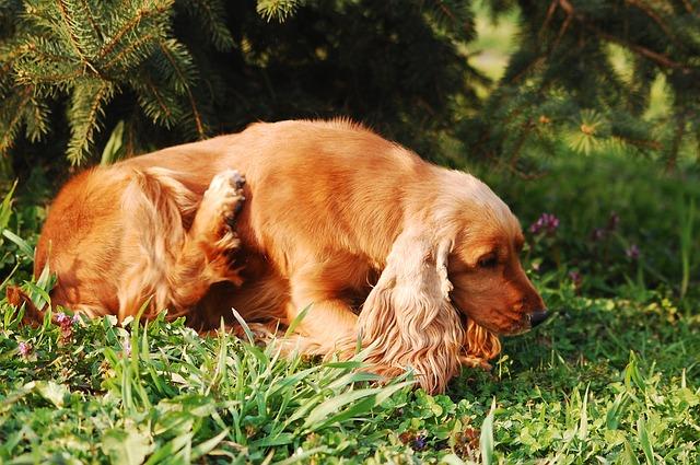 Allergie beim Hund